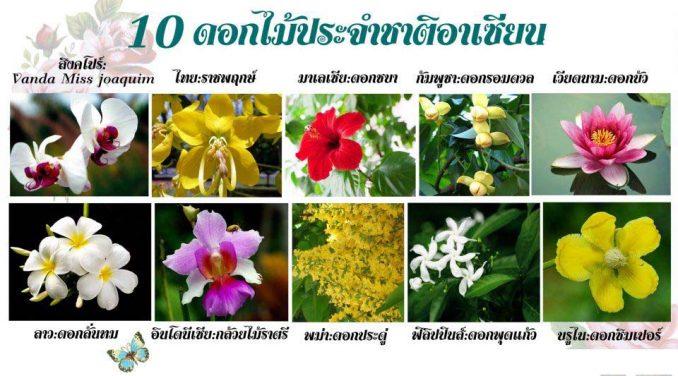all_flower