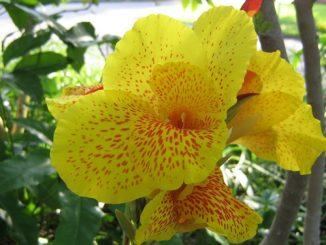 flower-eden