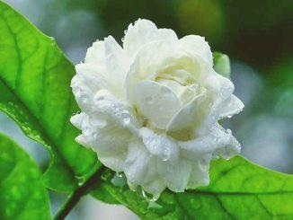Jasmine-news-site
