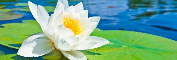 cropped-lotus-warter.jpg