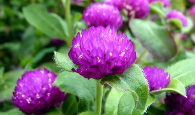 flower_puppey