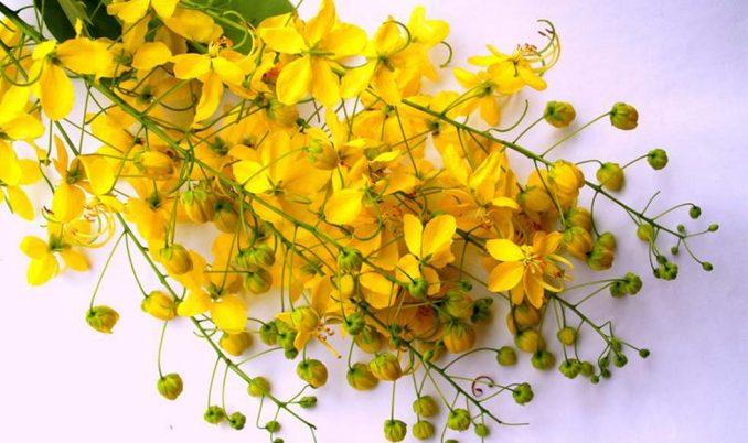 yalow_flower