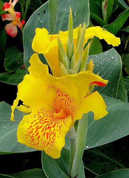 flower-yallo