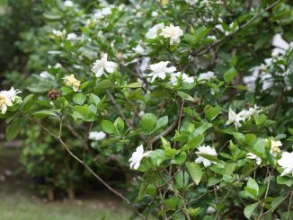 garden-flower-show