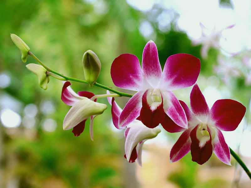 orchid-news-site